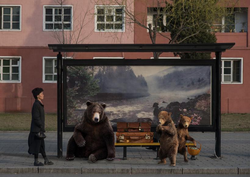 Bears Wanna Go Back by Basak Akdeniz-Cetegen
