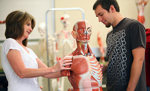 Anatomy & Physiology | Programs & Degrees | Mesa Community College