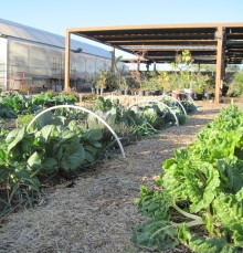 The Sustainable Agriculture Teaching Garden