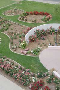 Aerial Shot Of A Portion Of The Rose Garden At MCC ...