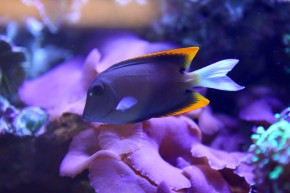 Fish in coral reef tank