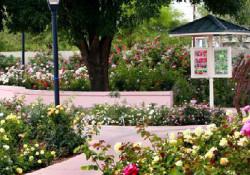 Photo of rose garden