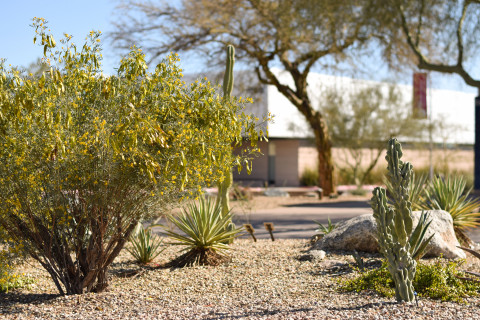 Cacti and other desert plants